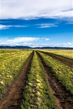 Preview iPhone wallpaper Mongolia, beautiful nature scenery, field, blue sky, clouds