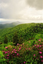 Preview iPhone wallpaper Mountains, trees, flowers, morning, clouds, nature landscape