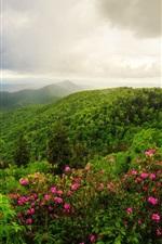 Montanhas, árvores, flores, manhã, nuvens, paisagem natureza