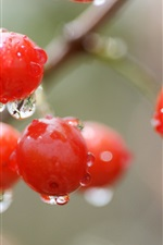 Preview iPhone wallpaper Red cherry, berry, water drops, rain, bokeh