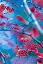 Preview iPhone wallpaper Red leaves, twigs, autumn, blur background