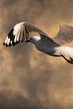 Preview iPhone wallpaper Seagull flight, clouds, dusk