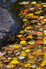 Preview iPhone wallpaper Stream, stone, water, leaves, autumn