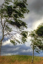 Trees, grass, clouds, wind