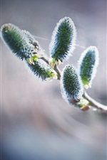 Preview iPhone wallpaper Twigs, spring, buds, bokeh
