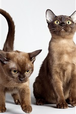 Preview iPhone wallpaper Two cute cats, yellow eyes