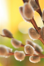 Preview iPhone wallpaper Willow twigs, spring