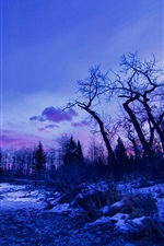 Preview iPhone wallpaper Winter, dawn, glow, trees, snow, lake