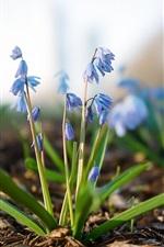 flores azuis, natureza, bokeh