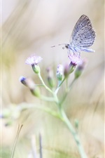 Preview iPhone wallpaper Butterfly, wildflower, bokeh