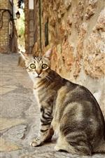 iPhone fondos de pantalla Gato mirar hacia atrás, calle