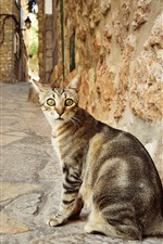 Cat look back, street