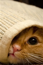 Preview iPhone wallpaper Cat under the blanket