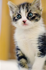 Preview iPhone wallpaper Cute furry kitten, face, eyes, blur background
