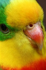 Preview iPhone wallpaper Cute parrot close-up, green yellow red feathers