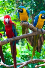 Preview iPhone wallpaper Five parrots, branches, birds close-up