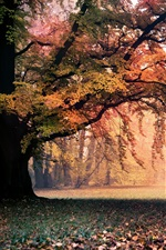 Preview iPhone wallpaper Golden autumn, nature, trees, leaves, fog, dawn