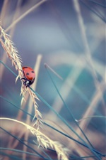 Preview iPhone wallpaper Grass, insect, ladybug, bokeh