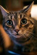 Preview iPhone wallpaper Green eyes cat, face, look, bokeh