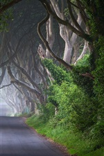 Preview iPhone wallpaper Ireland, road, trees, channel, morning, mist