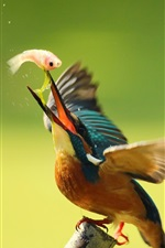 Preview iPhone wallpaper Kingfisher eating fish, wings, blur