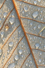 Preview iPhone wallpaper Leaf close-up, water drops