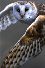 Preview iPhone wallpaper Owl flying, barn owl, wings