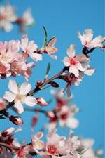 미리보기 iPhone 배경 화면 핑크 벚꽃 꽃 꽃, 꽃잎, 나뭇 가지, 봄