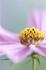 Pink flower macro photography, petals