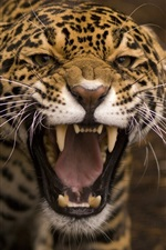 Preview iPhone wallpaper Predator, jaguar, wild cat, face, mouth, teeth