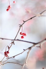 Preview iPhone wallpaper Red berries, cold, winter, twigs