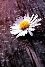 미리보기 iPhone 배경 화면 화이트 카모마일 꽃, 나무 보드