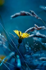 Preview iPhone wallpaper Yellow flower, grass, blue style