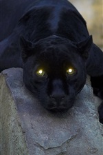 Preview iPhone wallpaper Animal close-up, black panther, yellow eyes, light