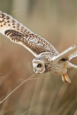 Preview iPhone wallpaper Bird close-up, owl flying, grass