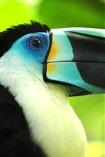 Preview iPhone wallpaper Bird macro photography, toucan, beak close-up