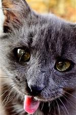 Preview iPhone wallpaper Black kitten, playful