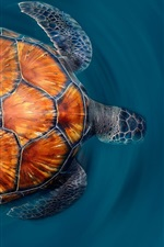 Preview iPhone wallpaper Canary Islands Turtle