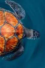 Ilhas Canárias Turtle
