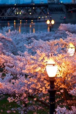 Preview iPhone wallpaper City, night, spring, trees, flowers, river, lamps