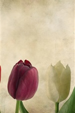 Preview iPhone wallpaper Colorful tulips, texture, flowers, paper