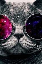 Preview iPhone wallpaper Cute cat with sunglass, very cool