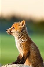 Preview iPhone wallpaper Cute little fox, cub, stone, bokeh