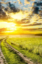 Preview iPhone wallpaper Early summer, sunrise, meadow, grass, road, sky, clouds