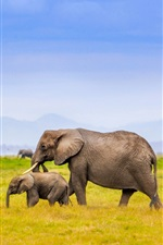 Preview iPhone wallpaper Elephants family, Africa, grass, blue sky
