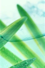 Preview iPhone wallpaper Grass leaves, green, water, early summer