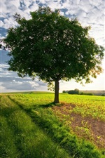 Preview iPhone wallpaper Lonely tree in the fields