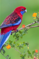 Preview iPhone wallpaper Red blue feathers bird, parrot, flowers, twigs
