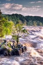 River, stream, trees, stones