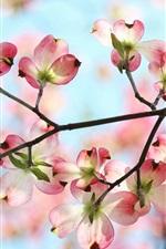 Preview iPhone wallpaper Spring, garden, twigs, pink flowers, petals